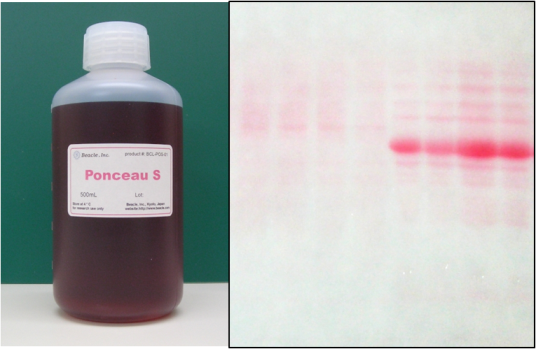 Ponceau-S Staining Solution